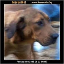 bluetick coonhound rescue illinois ohio redbone coonhound rescue u2015 adoptions u2015 rescueme org