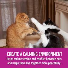 cat rage room amazon com comfort zone multicat diffuser kit for cat calming