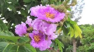 flowering trees southwest florida