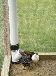 Can I Raise Chickens In My Backyard 56 Best How To Raise Chickens Images On Pinterest Raising