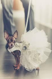 Dog Wedding Dress 339 Best Dog Dresses Images On Pinterest Dog Dresses Puppies