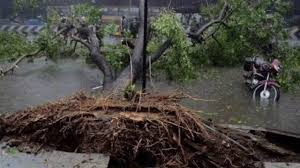 chennai cyclone uprooted trees replanted and saved in chennai
