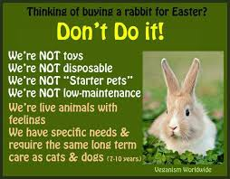 bunnies for easter 85 best bunnies are for not for easter images on