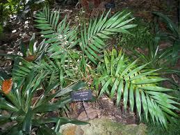 indoor trees with low light requirements indoor plants expert