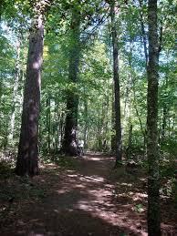 Chippewa National Forest Map Lost U002740 U0027 Trail Minnesota Alltrails Com