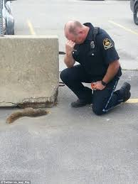 Dead Squirrel Meme - squirrel down omaha police squirrel is found dead in hilarious