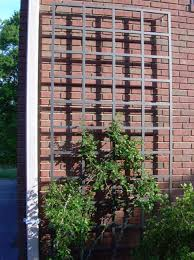 tall metal trellis for plants best trellis for plants gallery