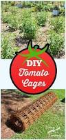 the 25 best tomato cages ideas on pinterest tomato cage