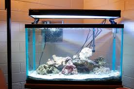 t5 lighting fixtures for aquariums starting a 29 gallon reef tank saltwaterfish forum