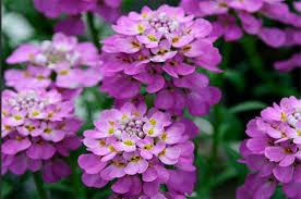 top 10 lists for gardeners plant lists backyard gardening