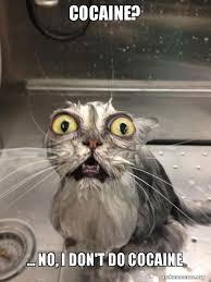 Cat Cocaine Meme - cocaine no i don t do cocaine cat bath make a meme
