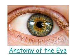 Anatomy Of The Eye Anatomy Of The Eye Ppt Video Online Download