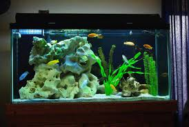 cool freshwater fish tank decoration ideas interior design for