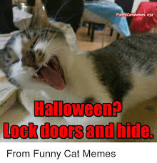 Halloween Cat Meme - funny catmemesxyz halloween ockdoors and hide from funny cat memes