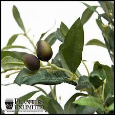 Laurel Topiary - 3 u0027 artificial olive tree topiary indoor