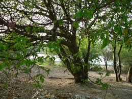 plants native to mexico pas 2 u2013 deadly plants this bizarre world