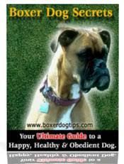 boxer dog training tips a guide to boxer dogs boxer puppies and the boxer dog breed