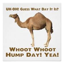 Hump Day Camel Meme - i can see friday from here happy hump day