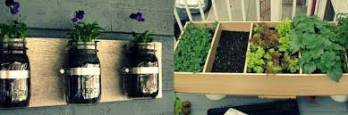 growing vegetables in apartment it u0027s totally possible body in