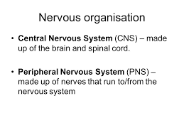 How Does A Reflex Arc Work In A Nervous System Nervous Control Simplest Type Of Response Controlled By The