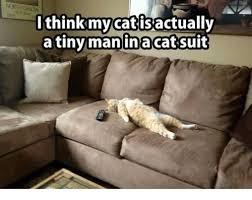 Cat Suit Meme - 25 best memes about catsuit catsuit memes