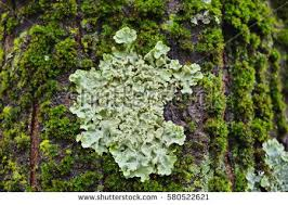 tree bark mold stock photo 580522621