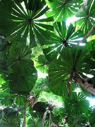 Tropical Rainforest Plant Species List - best 25 tropical forest ideas on pinterest tropical rain forest