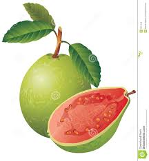 guava design 28 images guava royalty free stock images image