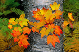 what color are guide signs fall leaves
