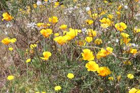 native iowa plants biodiversity of cyprus by ngo protection of the natural heritage