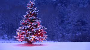 opulent christmas tree in snow wallpaper best christmas2017