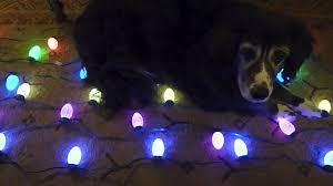 ge constant on christmas lights christmas christmas ge constant on lights led outdoorge icicle
