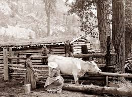 old picture of the day milking cow favorite recipes pinterest