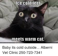 Cold Outside Meme - ice cold feet meets warm cat baby its cold outside alberni vet