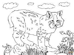 cute bobcat coloring page free printable coloring pages