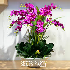 orchid plants for sale sale 200 pcs purple butterfly orchid flower seeds potted seed