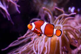 reu mystic aquarium