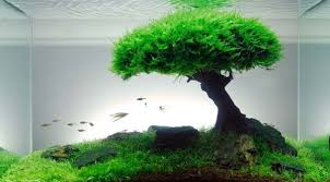 Diy Aquascape Learn How To Design An