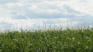 irrigated corn michigan corn field being irrigated stock video footage videoblocks