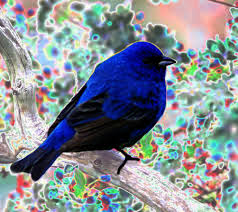 average object color plugins publishing only paint net forum