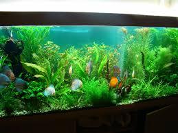 japanese aquascape aquascape designs home decor xshare us