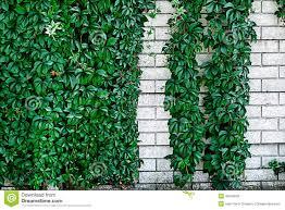 ornamental wall 11 stock photo image 45246004