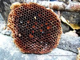 why do bees build hexagonal honeycomb mybeeline