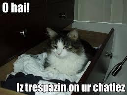 Lawyer Cat Meme - torts will destroy my gpa bitter empire