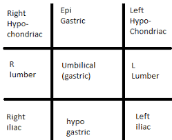 Human Anatomy And Physiology Notes Cranial Cavity Vertebral Thoracic Diaphragm Abdomino Human Anatomy