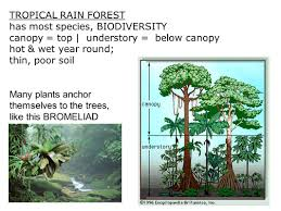 5 Dominant Plants In The Tropical Rainforest 4 3 Biomes Environments Are Grouped Into Biomes Group Of Ecosystems