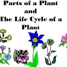 Life Cycle Of A Flowering Plant - va sol 2 4b plant life cycles pearltrees