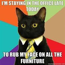 Mean Kitty Meme - business cat meme list of funny business cats