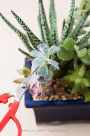 Plants That Dont Need Sunlight by How To Propagate Succulents From Leaves And Cuttings Succulents