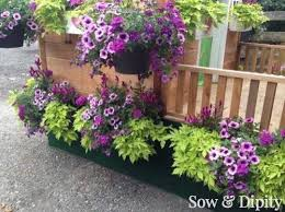 Flower Planter Ideas by 828 Best Container Gardening Images On Pinterest Gardening Pots
